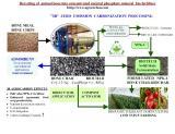 infographic bio-phosphate process